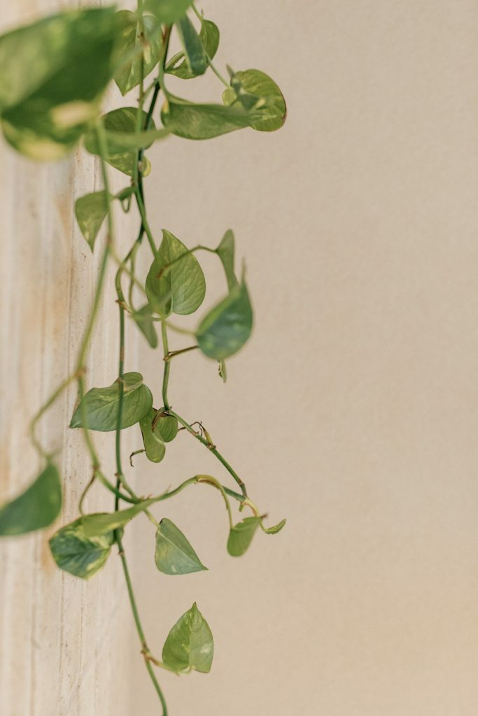 Adytum Spa – Elixr bar – plants